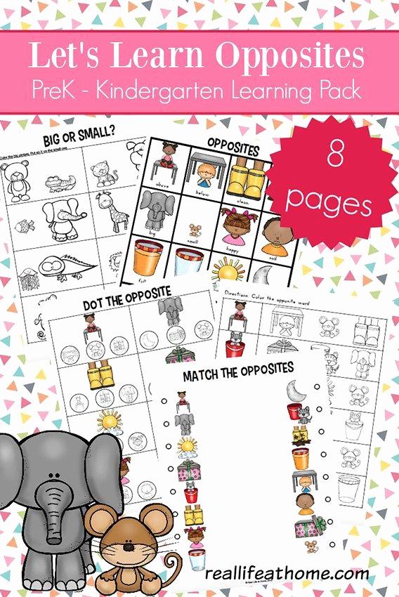 Opposites Worksheet for Preschool Beautiful Opposites Worksheets for Kindergarten and Preschool