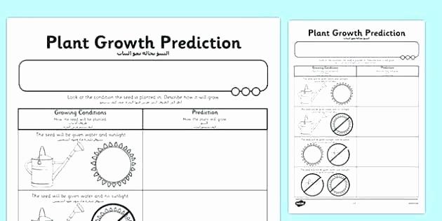 Predictions Worksheets 1st Grade Elegant Predictions Worksheets 1st Grade Prediction Worksheets for