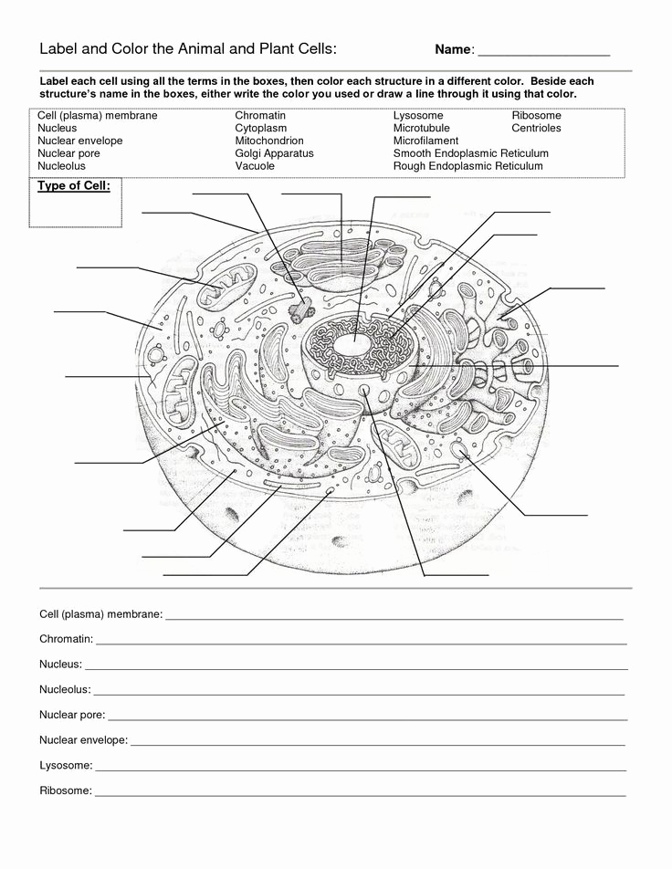 Printable Cell Worksheets Fresh Printable Cell Worksheets Labeling A Cell Worksheet In