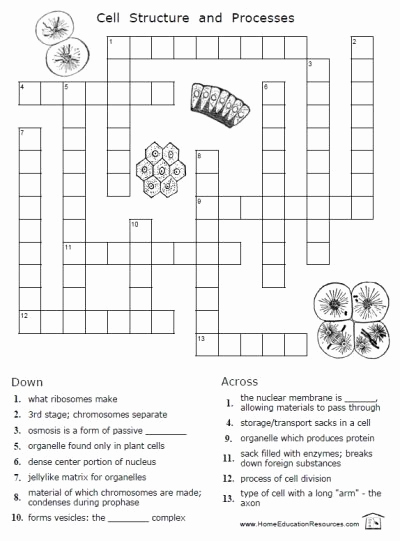 Printable Cell Worksheets Inspirational Free Cells Worksheets Thrifty Homeschoolers