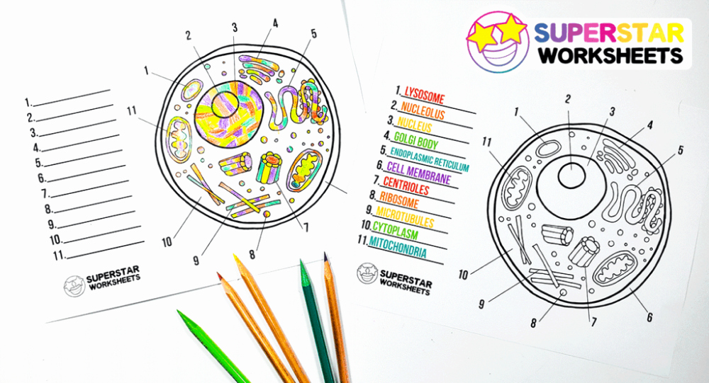 Printable Cell Worksheets Inspirational Free Printable Cell Worksheets for Coloring Pages Label