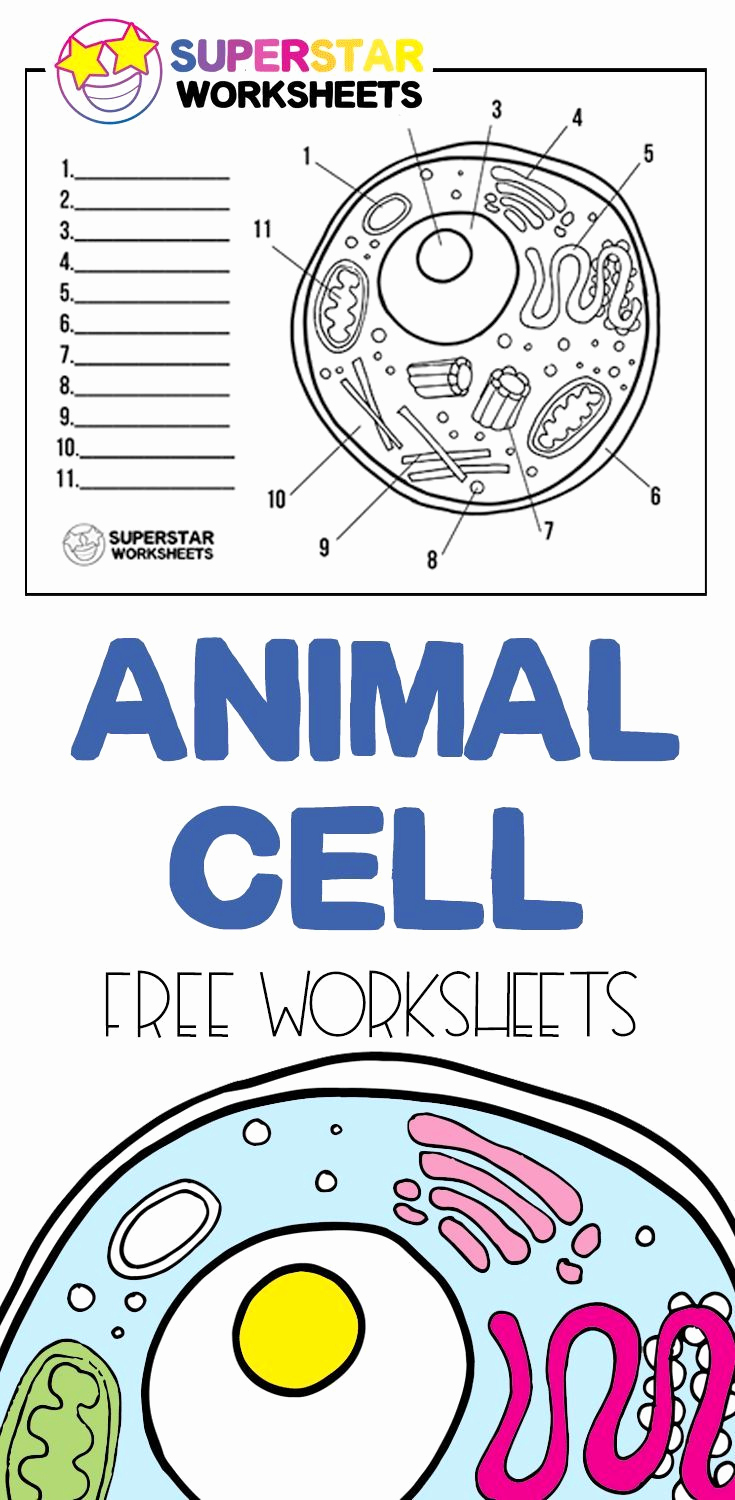Printable Cell Worksheets Luxury Animal Cell Worksheets In 2020