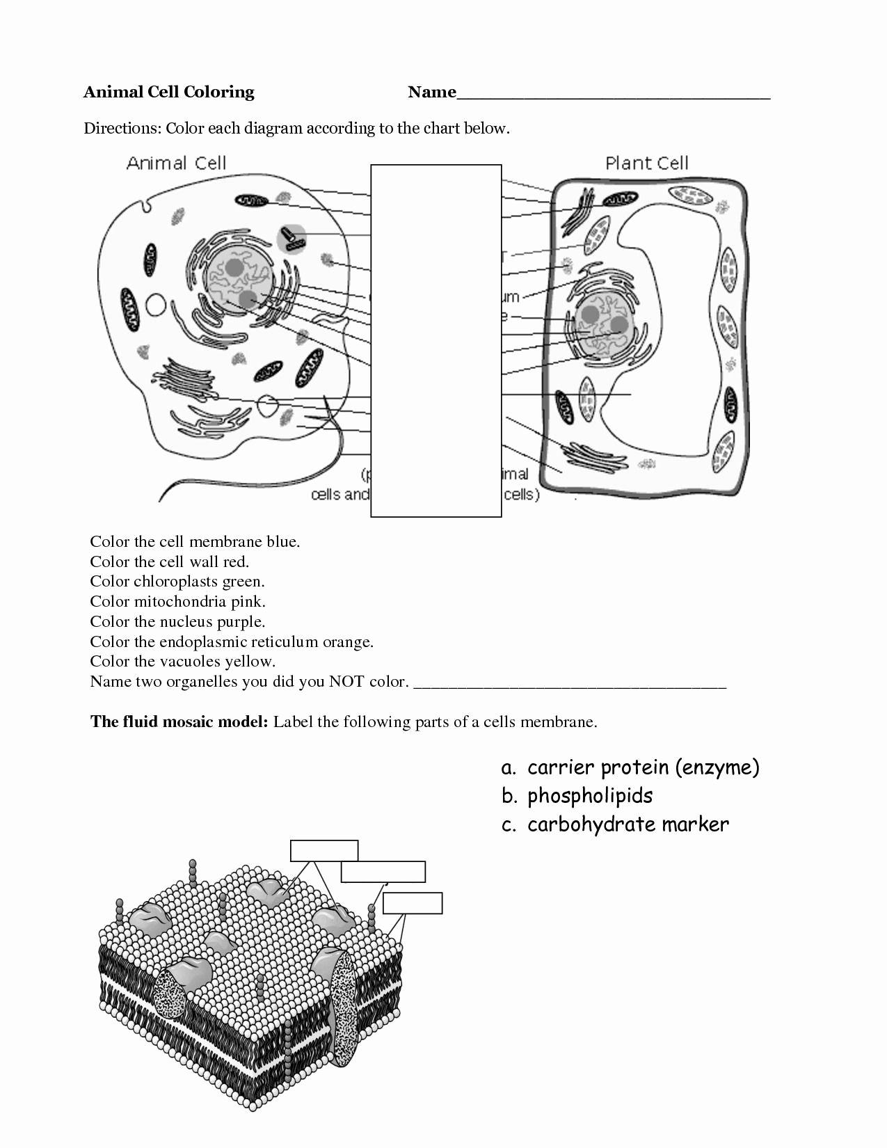 Printable Cell Worksheets New Animal Cell Worksheet Labeling