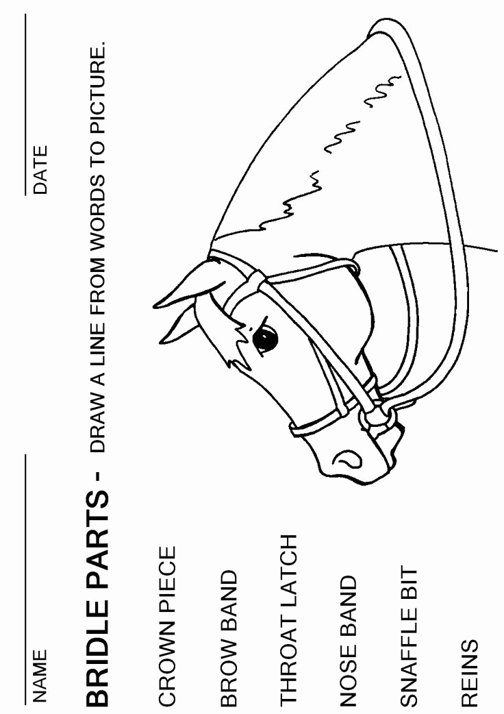 Printable Horse Anatomy Worksheets Best Of English Bridle Parts Worksheet