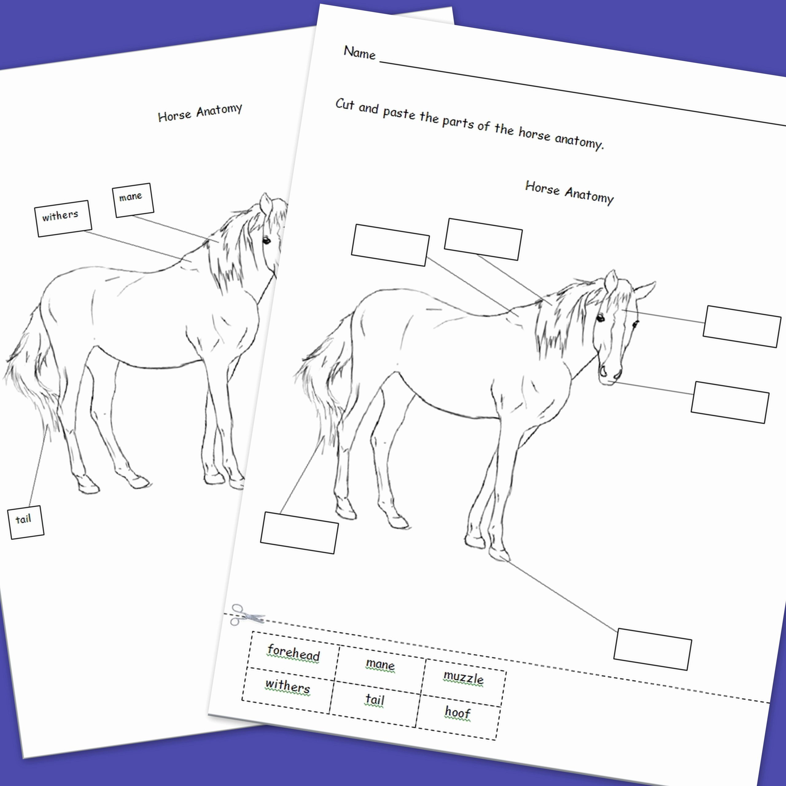 Printable Horse Anatomy Worksheets Best Of Pin On My Tpt