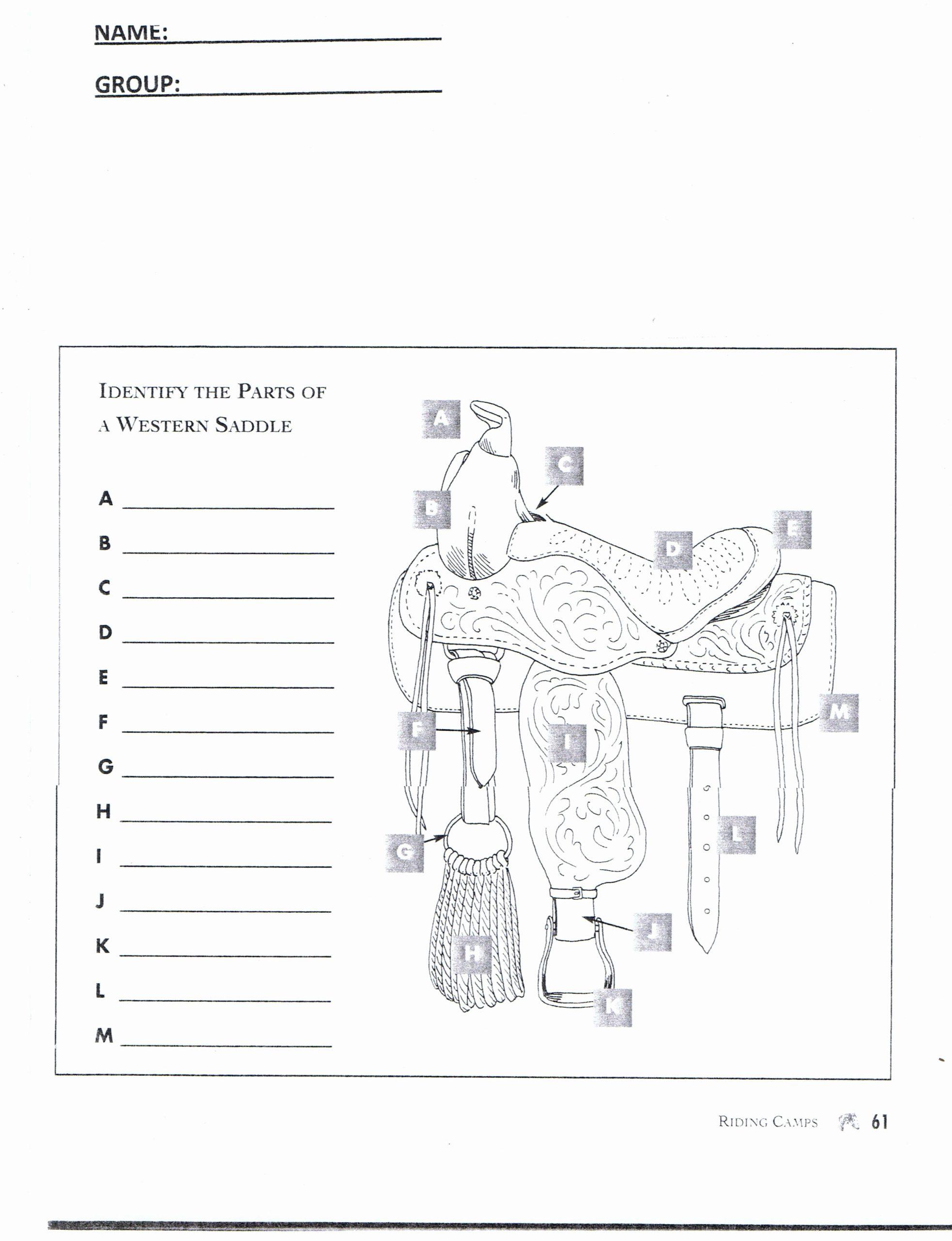 Printable Horse Anatomy Worksheets Fresh Worksheet Part Of Saddle Google Search