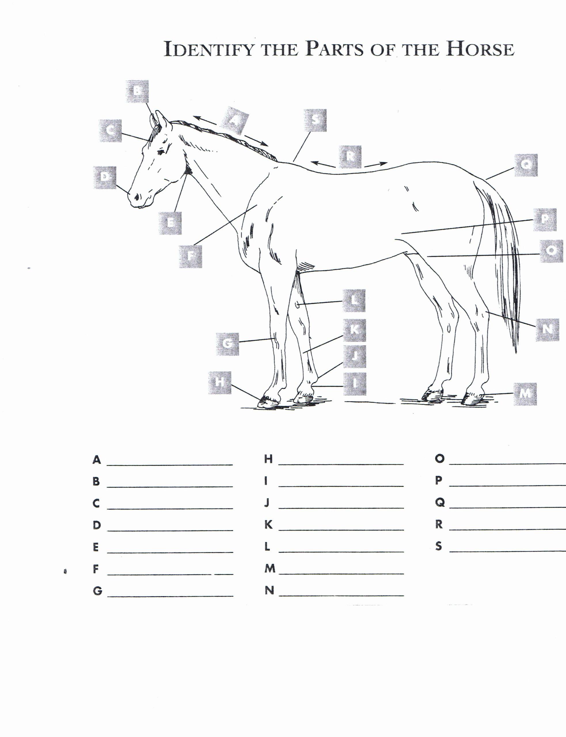 Printable Horse Anatomy Worksheets Unique Free Printable Horse Worksheets