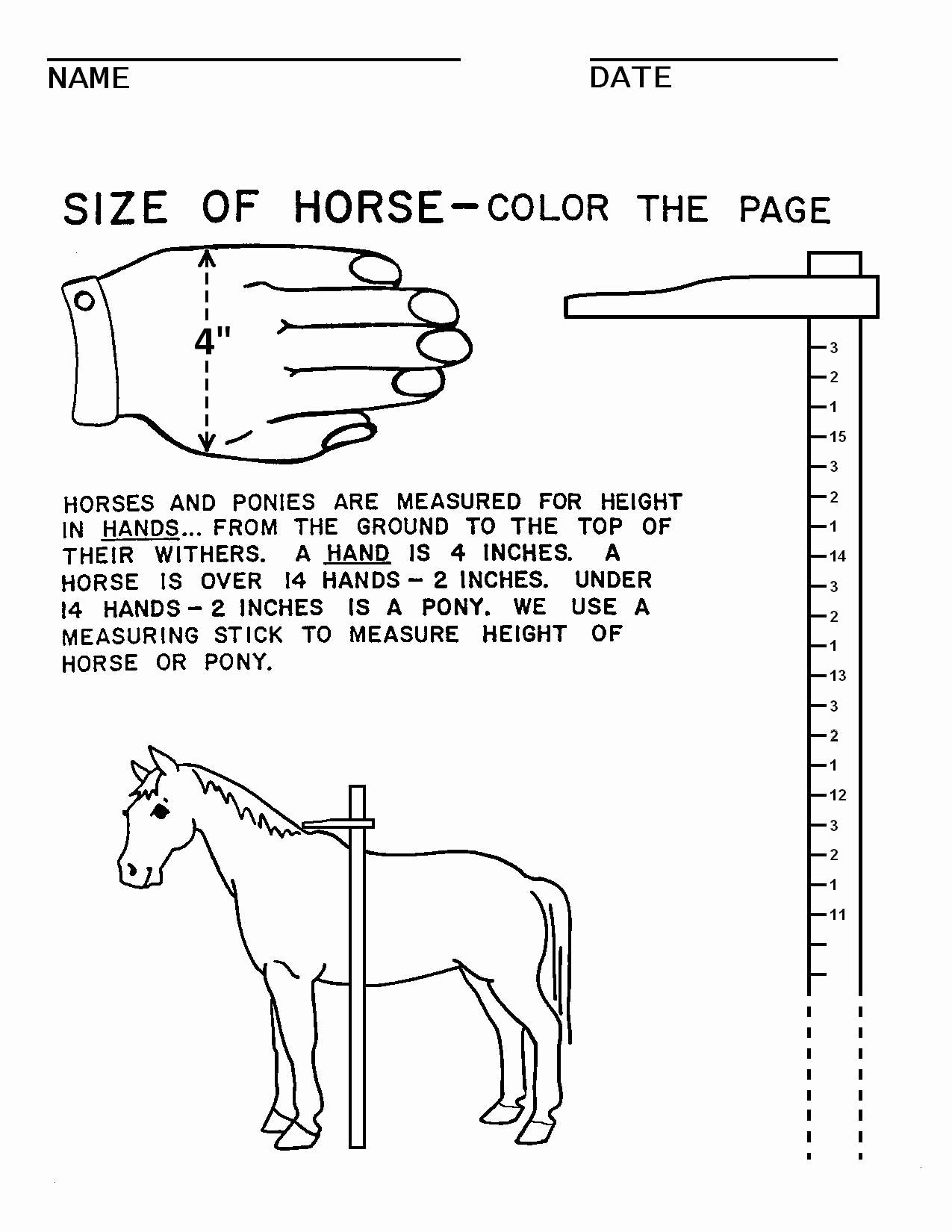 Printable Horse Anatomy Worksheets Unique Horse Camp Worksheets