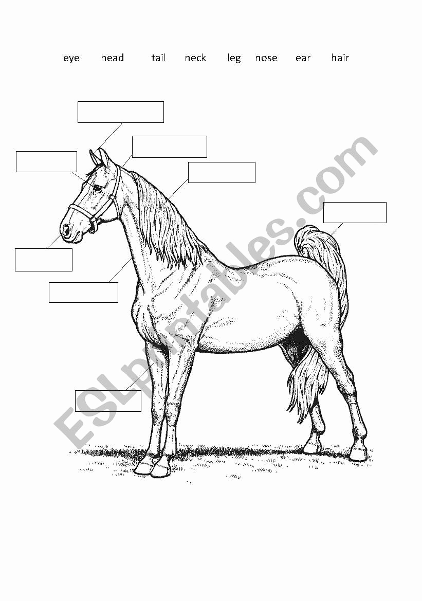 Printable Horse Anatomy Worksheets Unique Parts the Horse Worksheet Escolagersonalvesgui