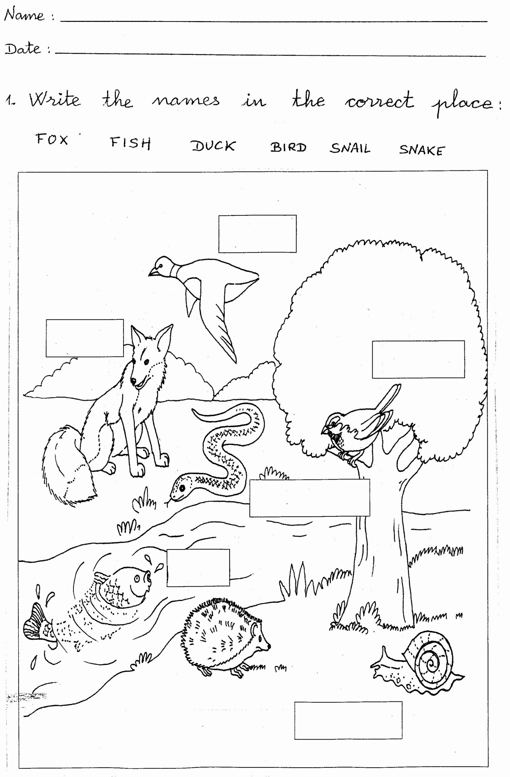 Science Worksheet 1st Grade Best Of 1st Grade Worksheets to Print