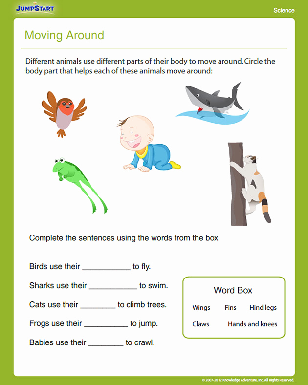 Science Worksheet 1st Grade Best Of New 178 First Grade Science Worksheets Animals