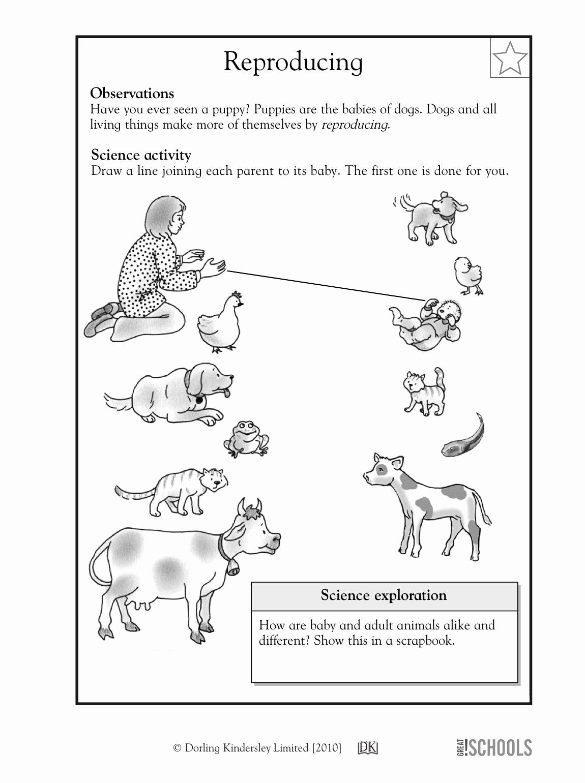 Science Worksheet 1st Grade Best Of Teach Child How to Read First Grade Science Worksheets