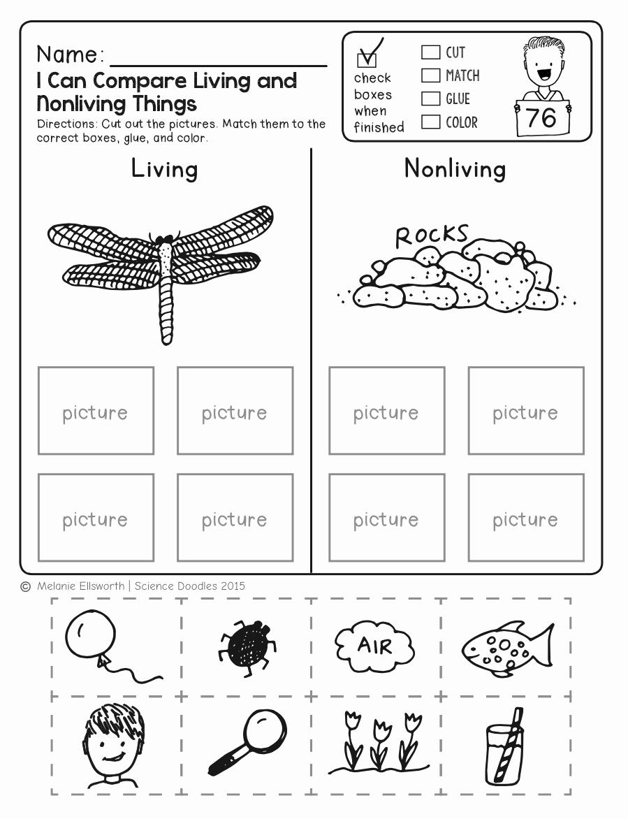 Science Worksheet 1st Grade Lovely 1st Grade Worksheet Science for Free Download 1st Grade