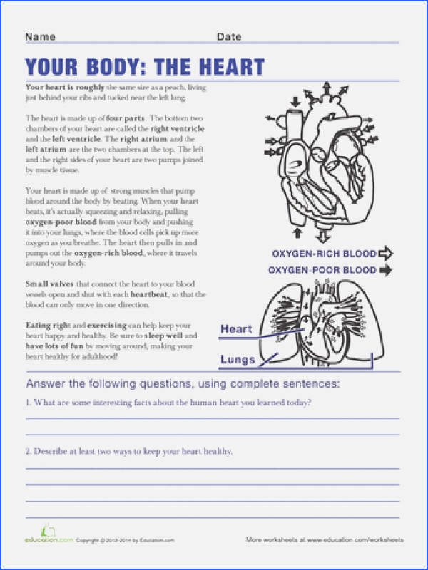 Science Worksheets for 5th Grade Beautiful 5th Grade Science Worksheets with Answer Key Pdf