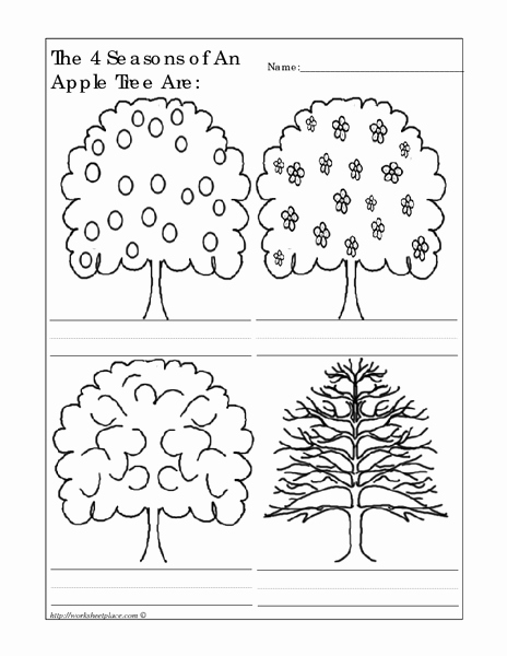 Seasons Worksheets for First Grade Luxury the 4 Seasons Of An Apple Tree are Worksheet for
