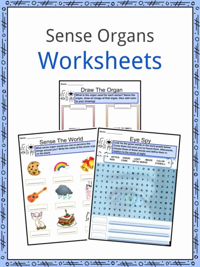 Sensory Detail Worksheet Elegant Making Sense Sensory Details Worksheets