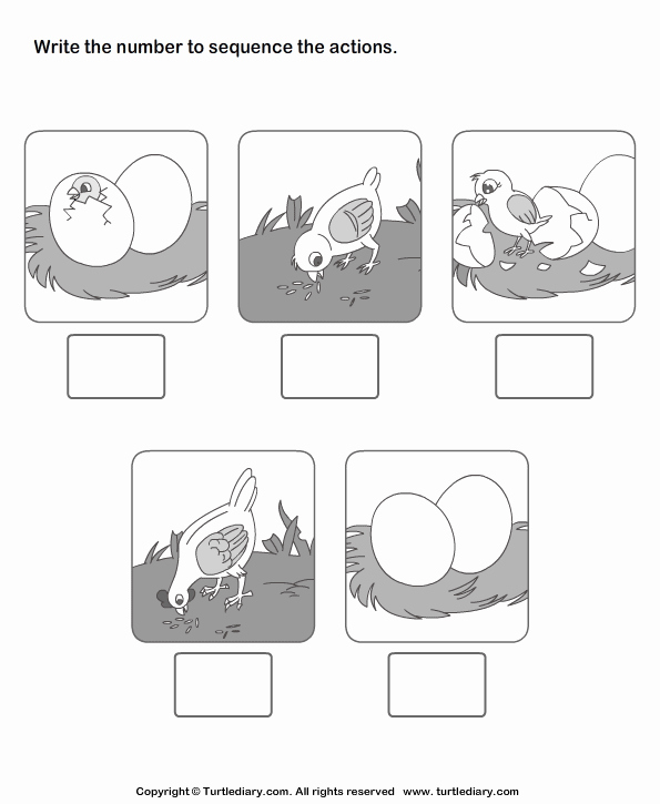 Sequencing Pictures Worksheets Luxury Picture Sequence Worksheet Turtle Diary
