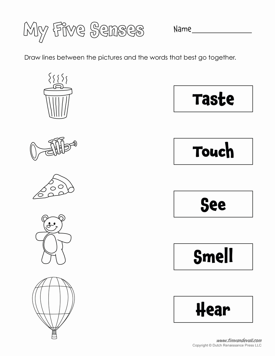 The Five Senses Worksheets Elegant Printable 5 Senses Worksheet Tim S Printables